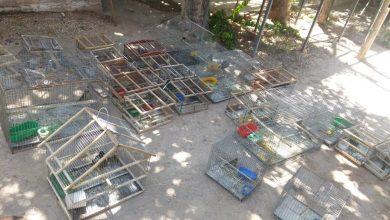 Photo of Ambiente recuperó 32 aves en un allanamiento