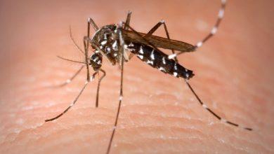 Photo of Dos casos sospechosos de dengue en San Juan